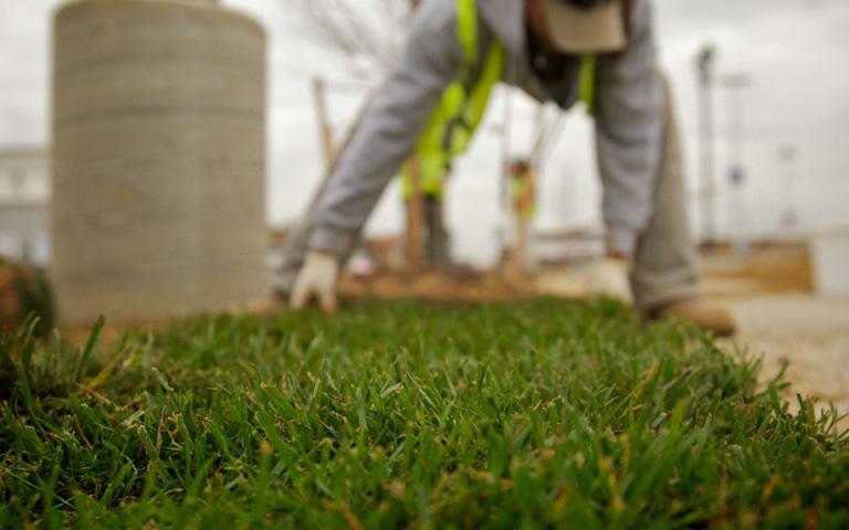 landscaper installing new sod